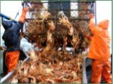 """5. Crab Fisherman Immortalized in the hit reality TV series """"The Deadliest Catch,"""" crab fishermen comb the freezing and dangerous Alaskan sea in the hunt for crabs despite the inherent dangers of getting entangled by the crab-catching nets or thrown to the sea by the strong tidal surges and violent"""