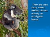 They are very fussy eaters, feeding almost entirely on eucalyptus leaves.