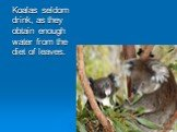 Koalas seldom drink, as they obtain enough water from the diet of leaves.
