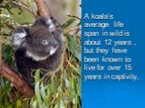 A koala's average life span in wild is about 12 years , but they have been known to live for over 15 years in captivity.