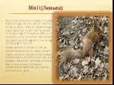 Molt(Линька). Squirrel sheds 2 times in a year, excluding the tail, which molts once a year. Adult males begin molt sooner than the females and young of the year. Moult in protein, like all other mammals caused by changes in the length of daylight hours. Білка линяє 2 рази в рік, за винятком хвоста,